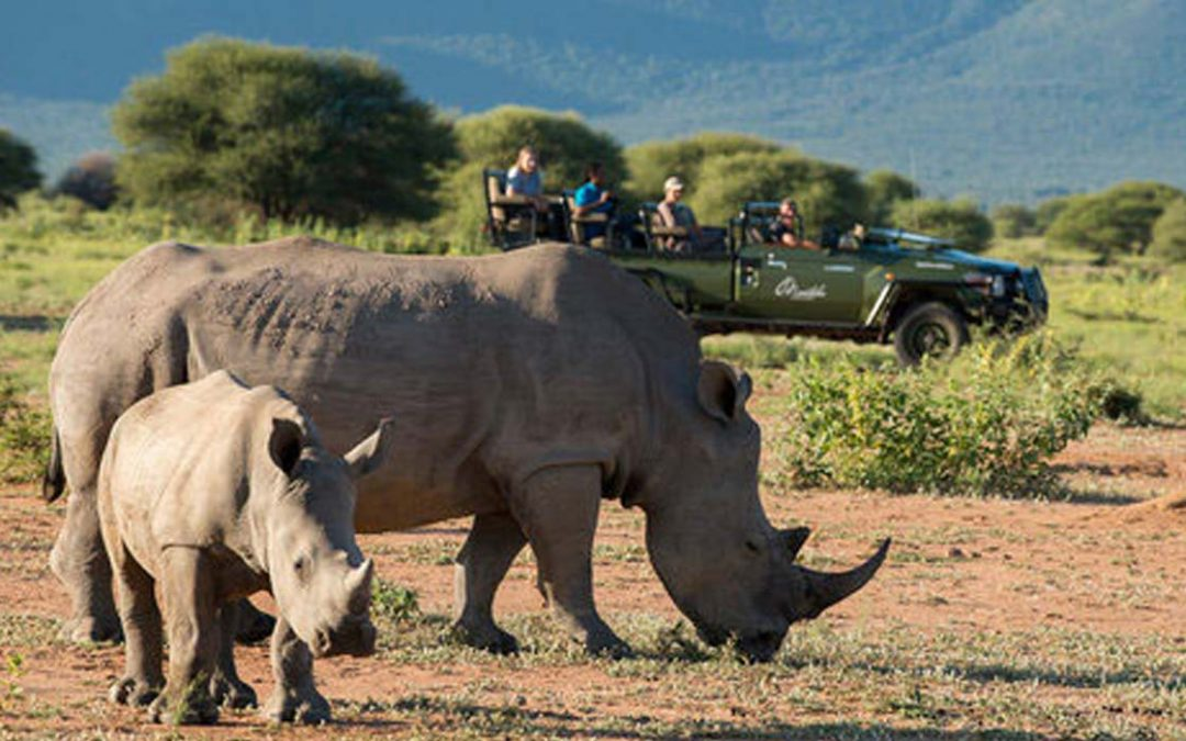 South Africa Safari Getaways