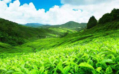 Wonders of Sri Lanka